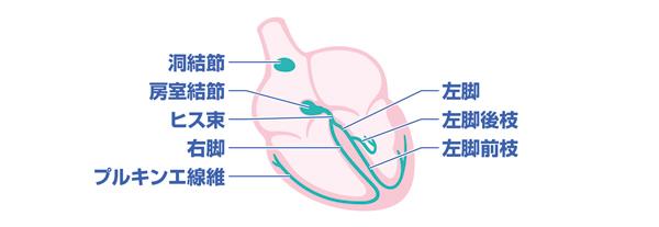 心筋 固有 【薬学生必見】薬学生は覚えておきたい固有心筋と特殊心筋の違い