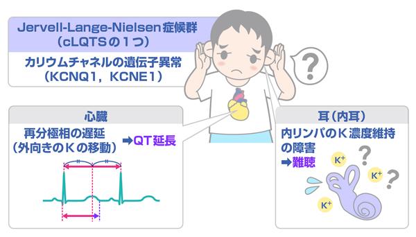 第24回】速読式 QT延長推定と基礎疾患 | INFORMA byメディックメディア
